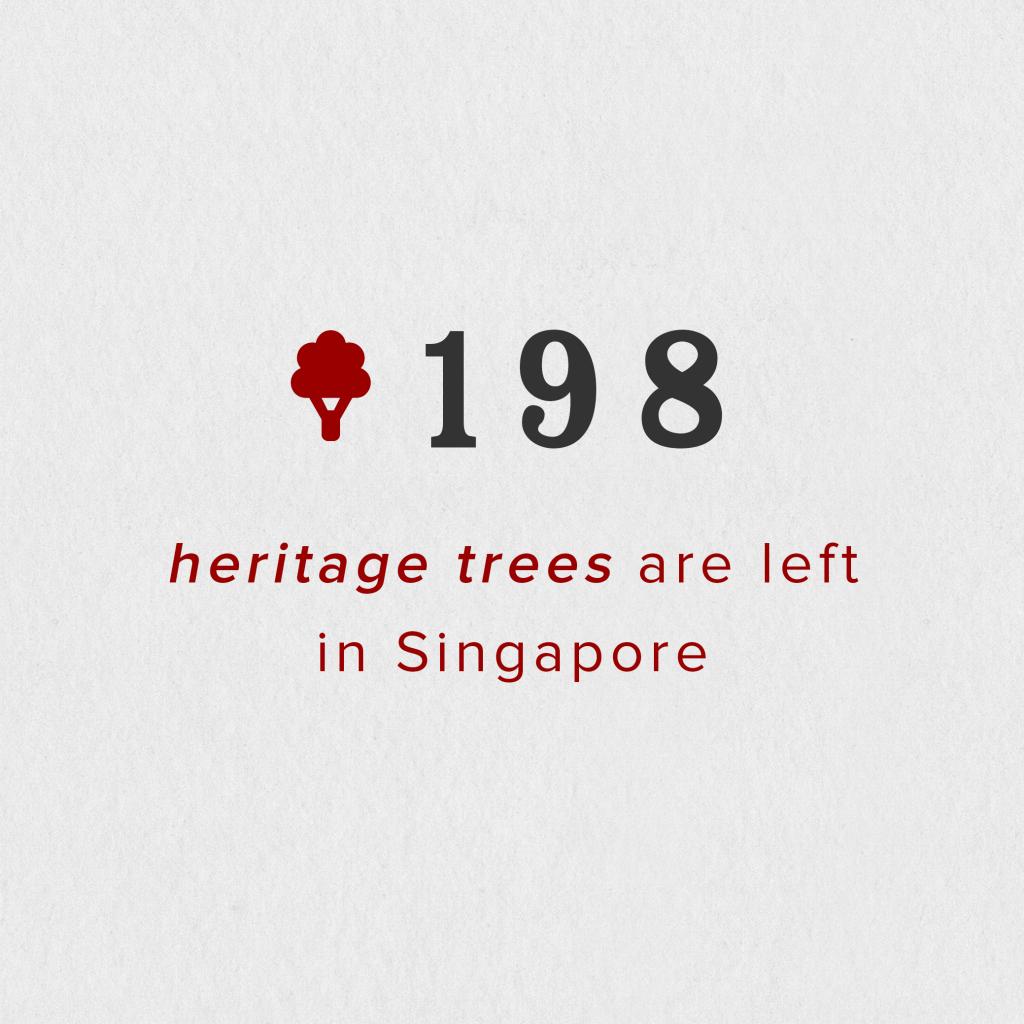 12_SG 365_heritage trees